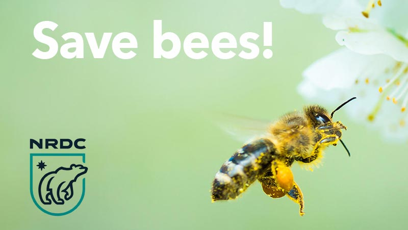 Save bees!